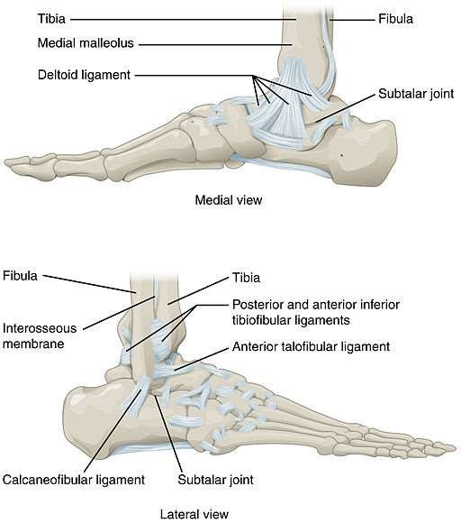 Ankle and feet joints