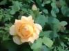 Gardener_Jo