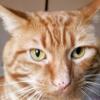 Kittykatty53