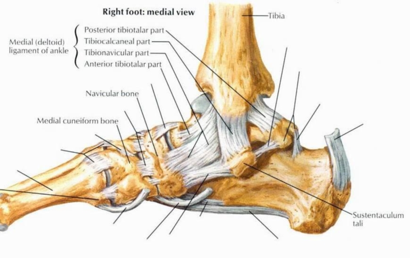 Random Sudden And Severe Inner Ankle Pain Ankle Problems