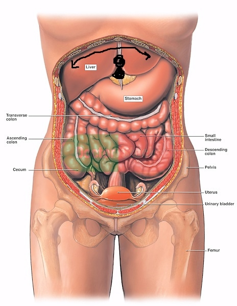possible gall bladder symptoms?? | Gallbladder Problems ... on