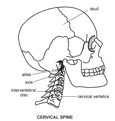 Kenneths Blog Spine Diagram