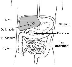 Gallstones symptoms causes and treatment patient diagram showing the liver ccuart Gallery