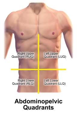 Right and Left Upper Quadrants