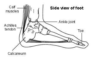 Foot - Achilles Tendon