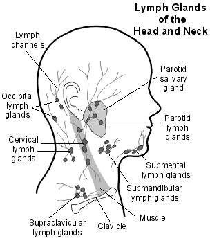 swollen lymph glands  lymph nodes