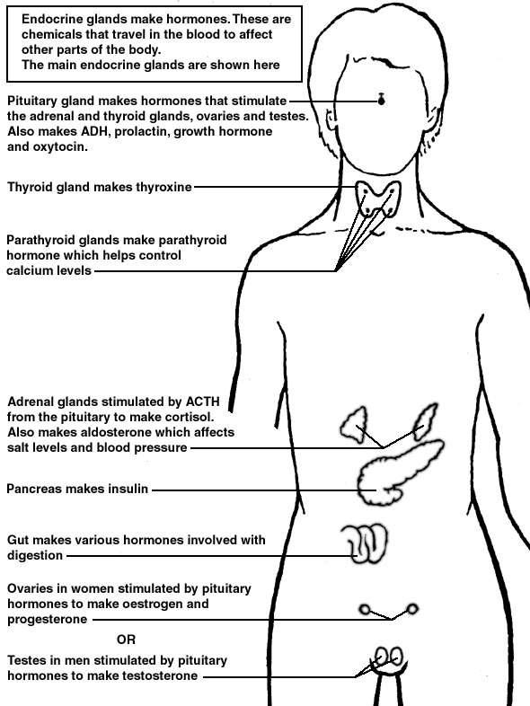 Endocrine Glands