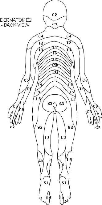 Dermatomes Back View Diagram Patient