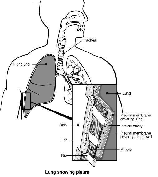 Chest Wall And Pleura