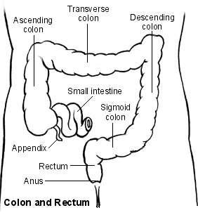 Large bowel