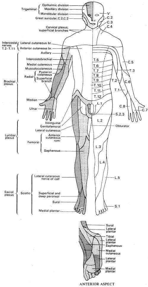 neurological examination of the upper limbs  information