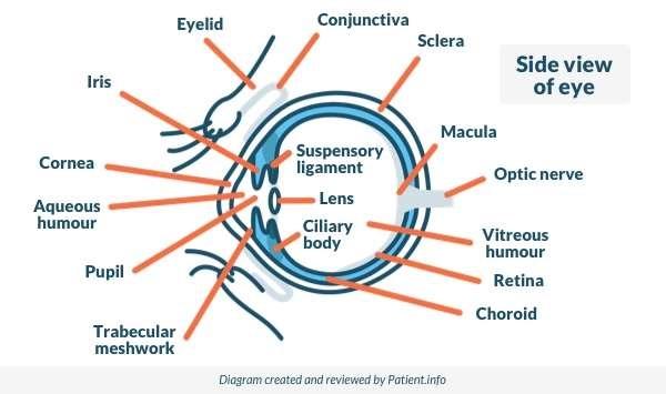 Eye Conjunctivitis Symptoms And Treatment Patient
