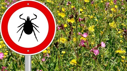 How to avoid tick bites and Lyme disease